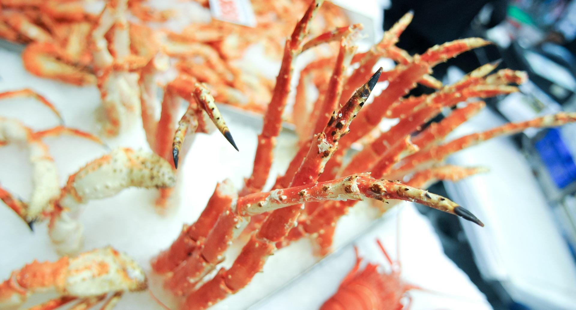 crab_shell_plastic_04