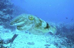 squid_plastic_01