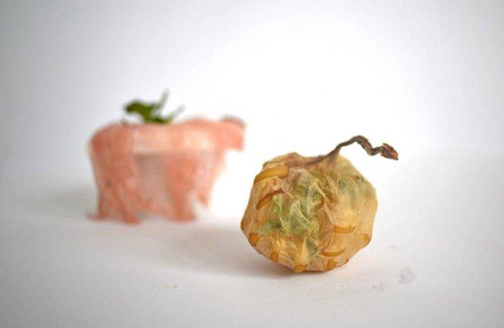 scoby-packaging-roza-janusz-3.jpg.860x0_q70_crop-smart