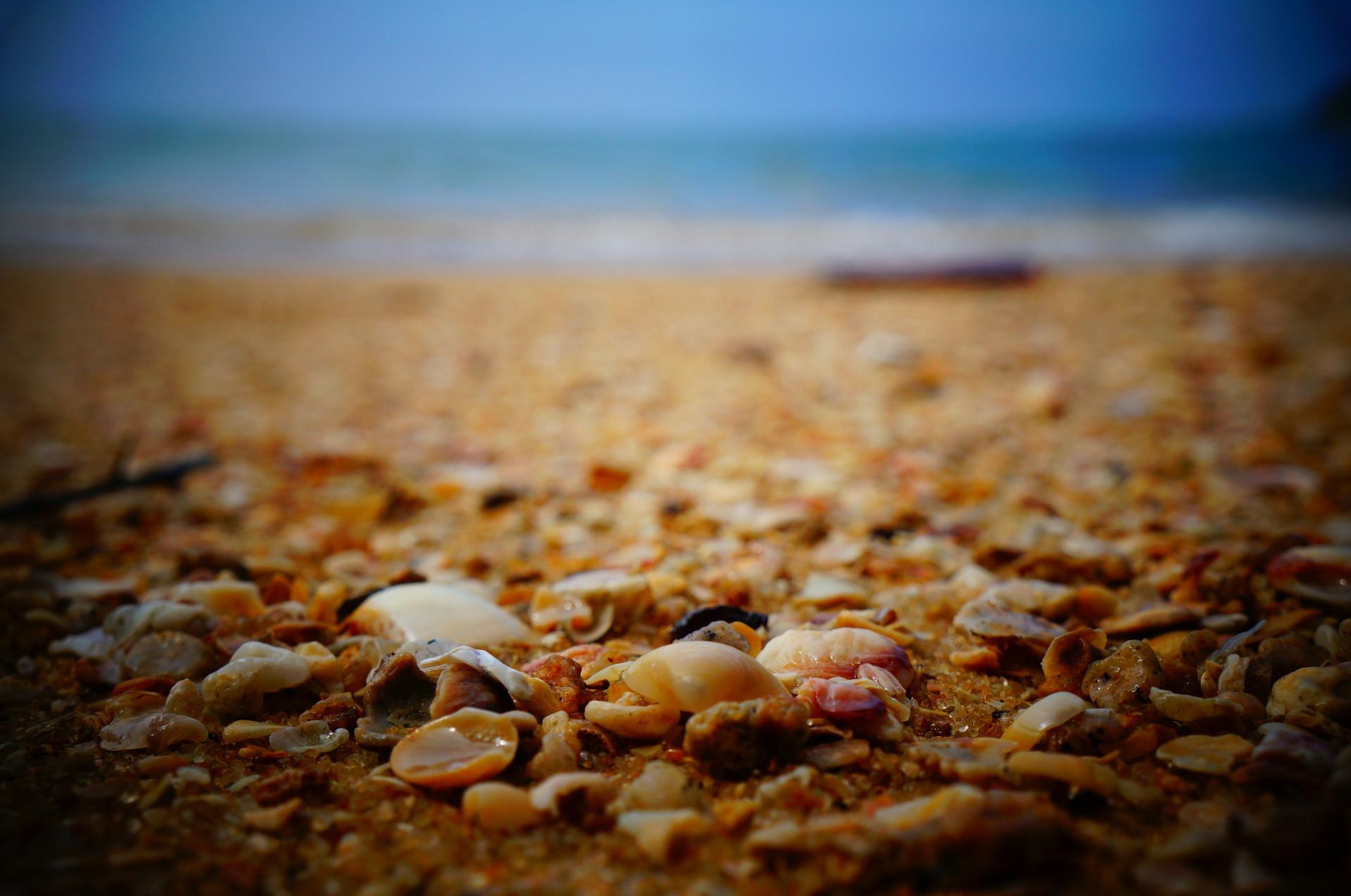 seashells-336648_1920