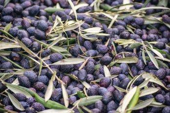 olive-3866906_1920