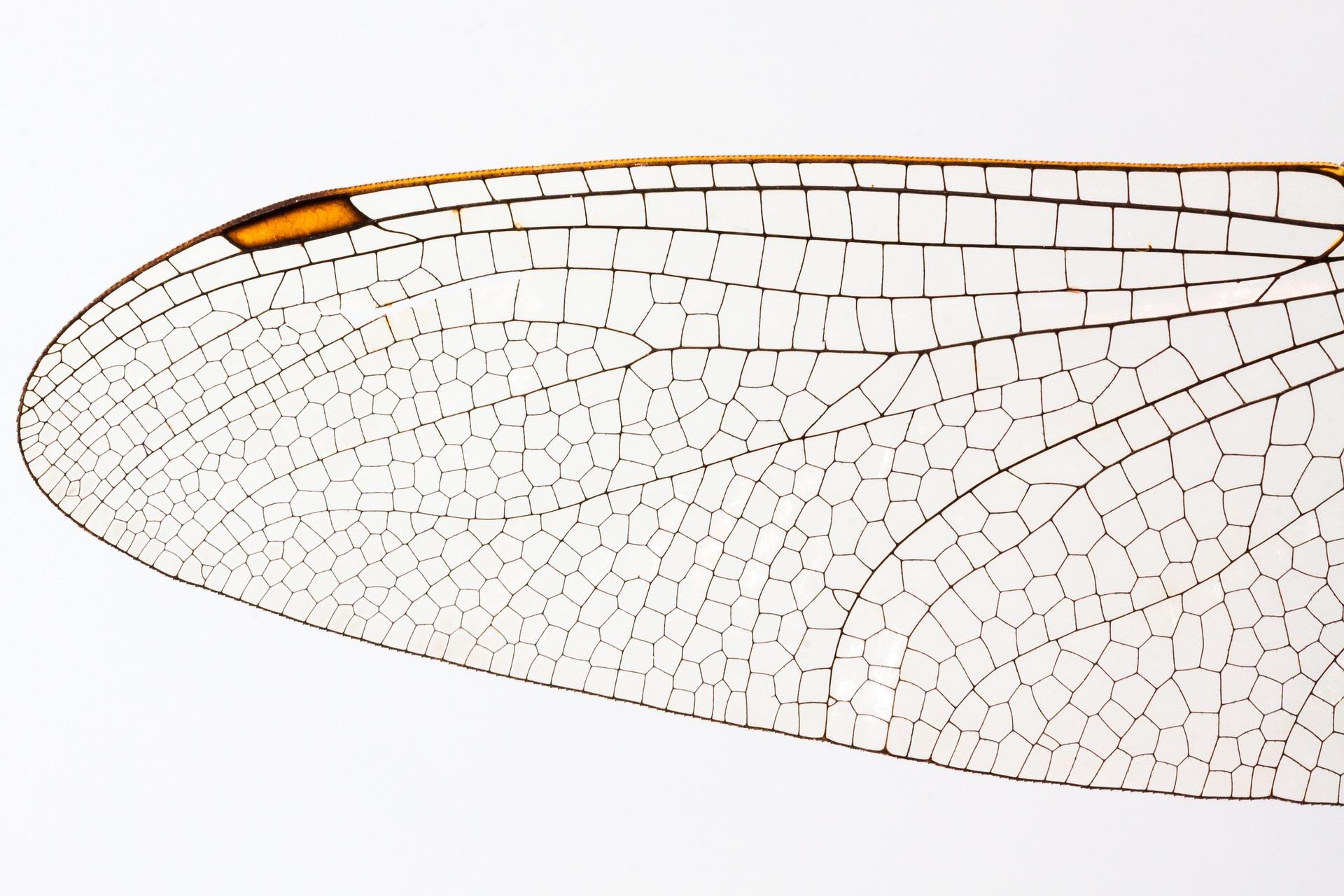 dragonfly-862886_1920