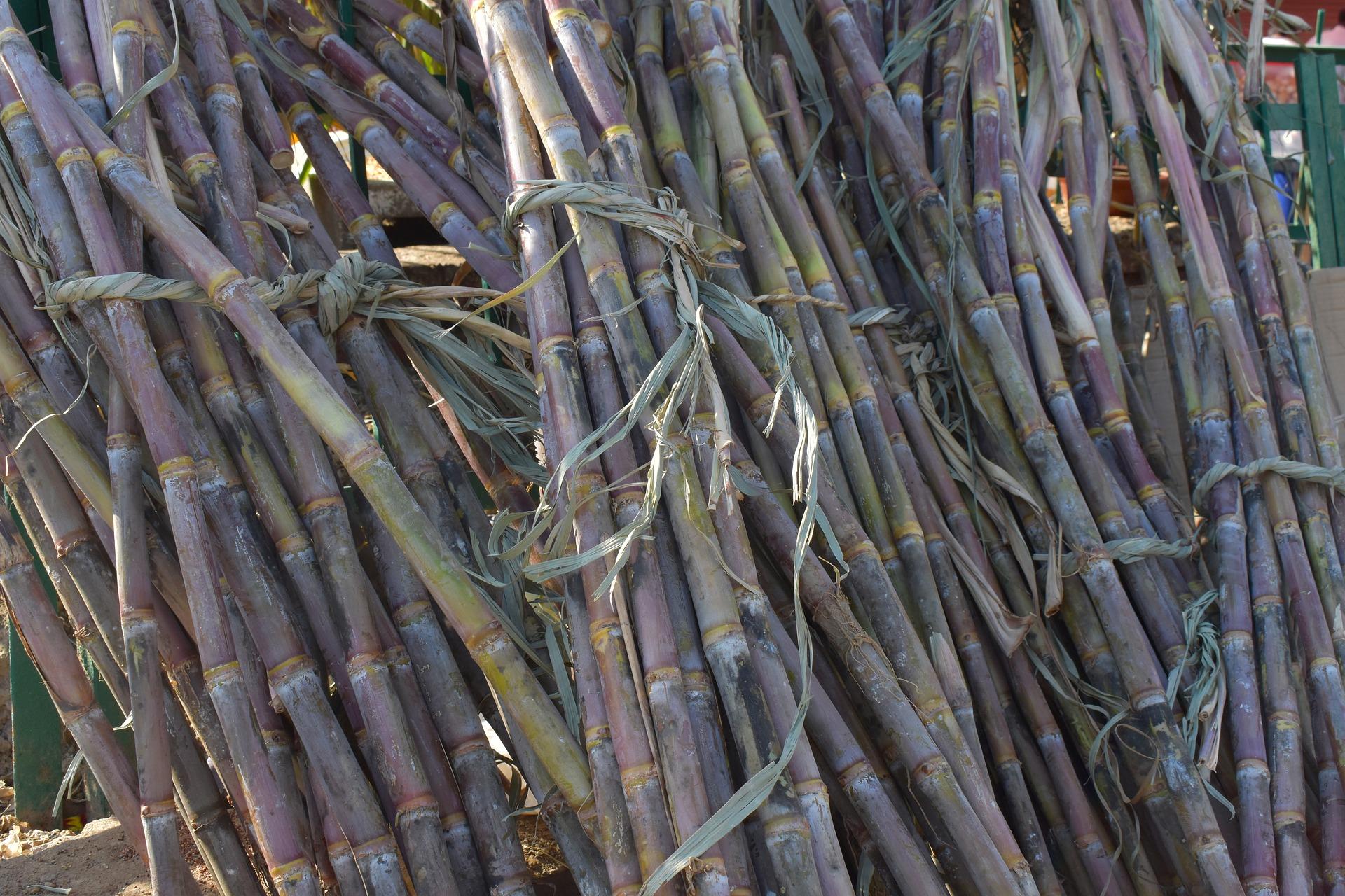 sugarcane-2857972_1920