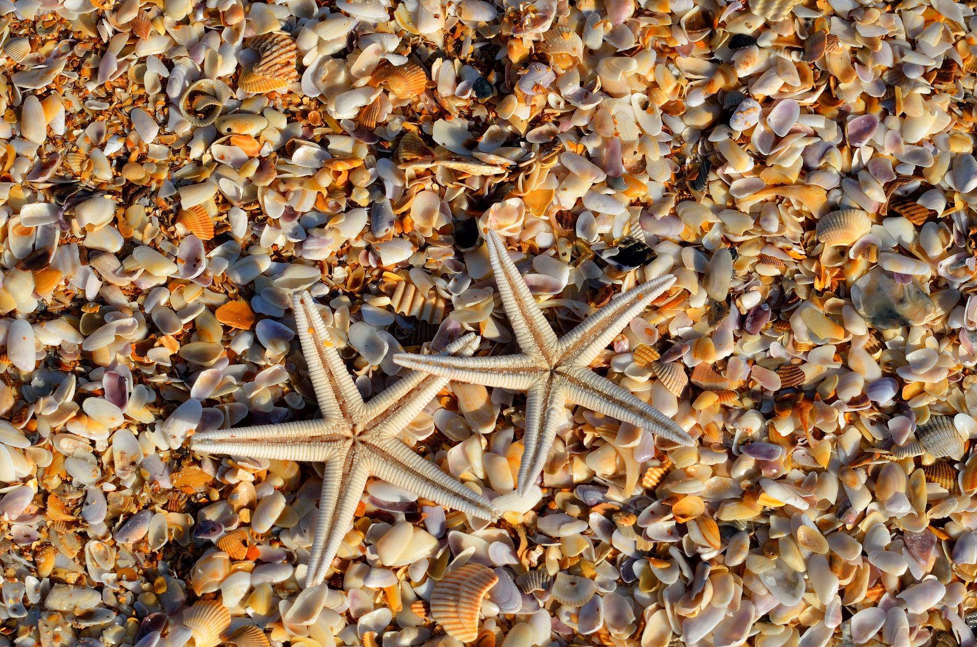 starfish-1572797_1920