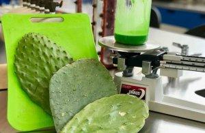cactusplastic1