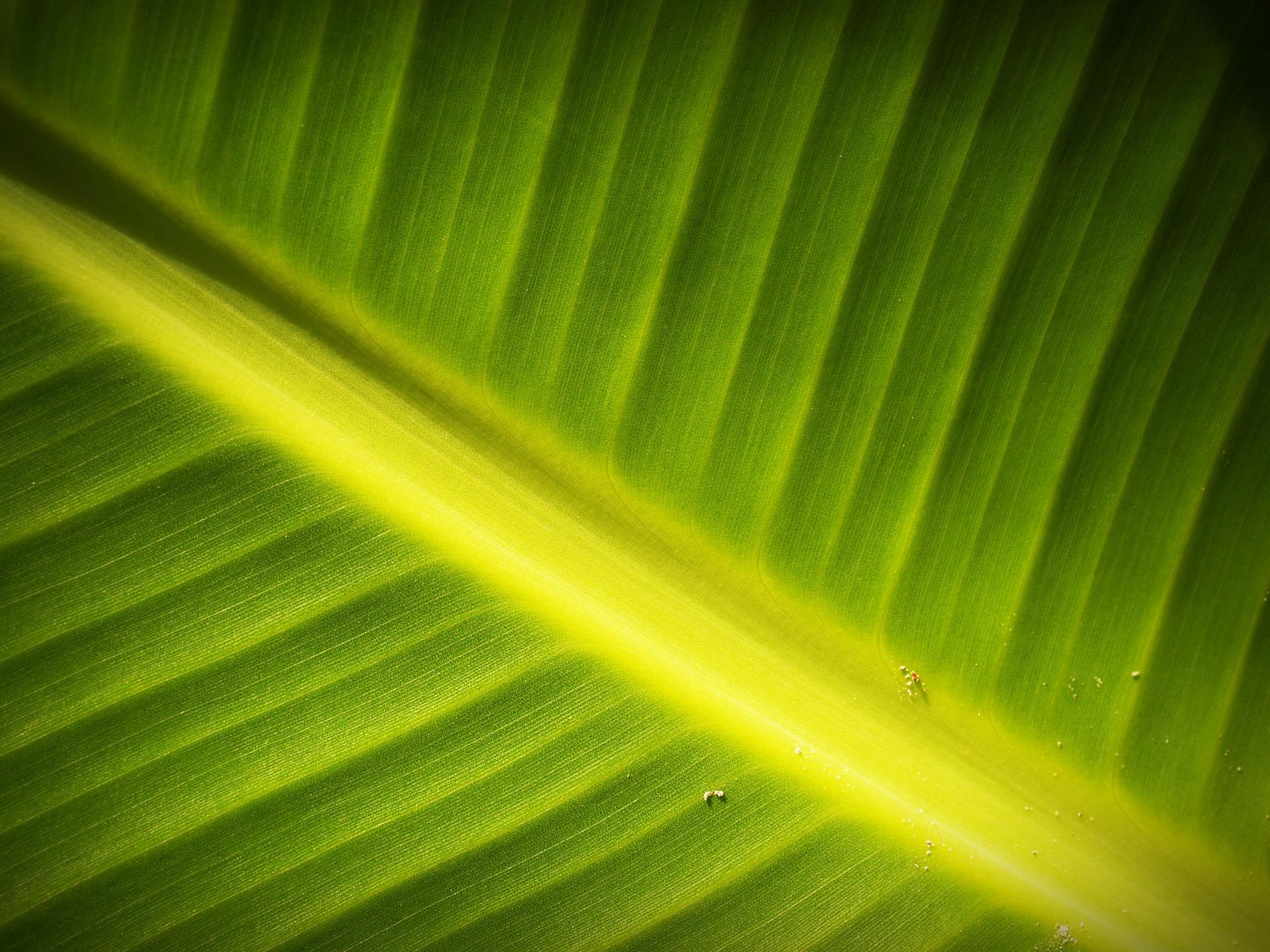 leaf-1551206_1920