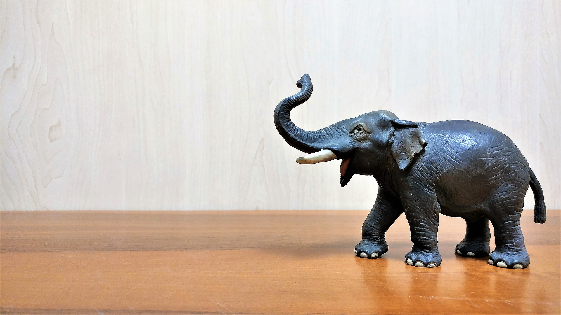 elephant-3340037_1920