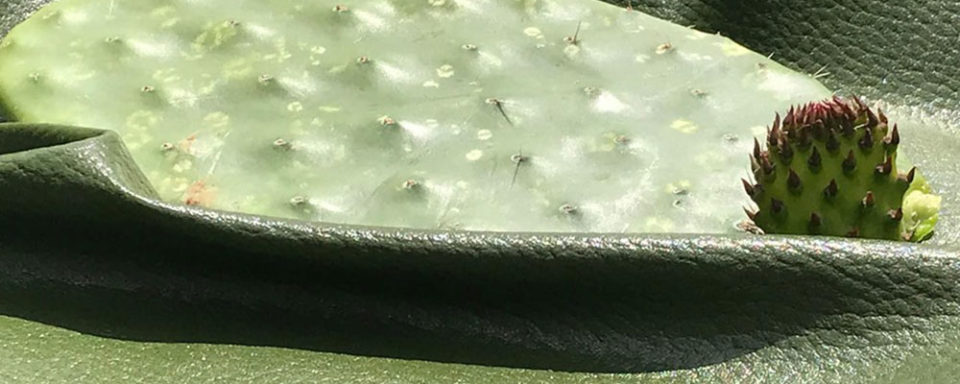 vegan-leather-cacti-slider-960x384