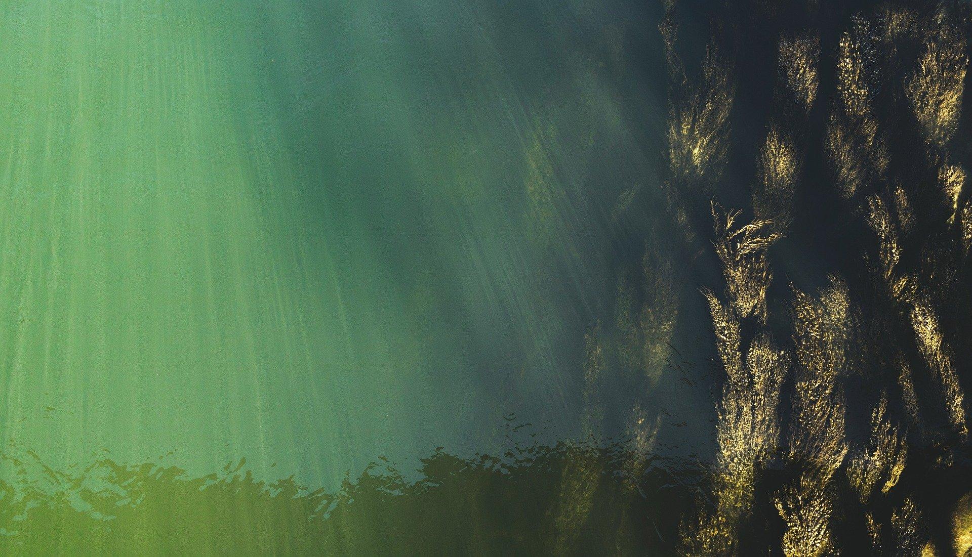 underwater-2966572_1920