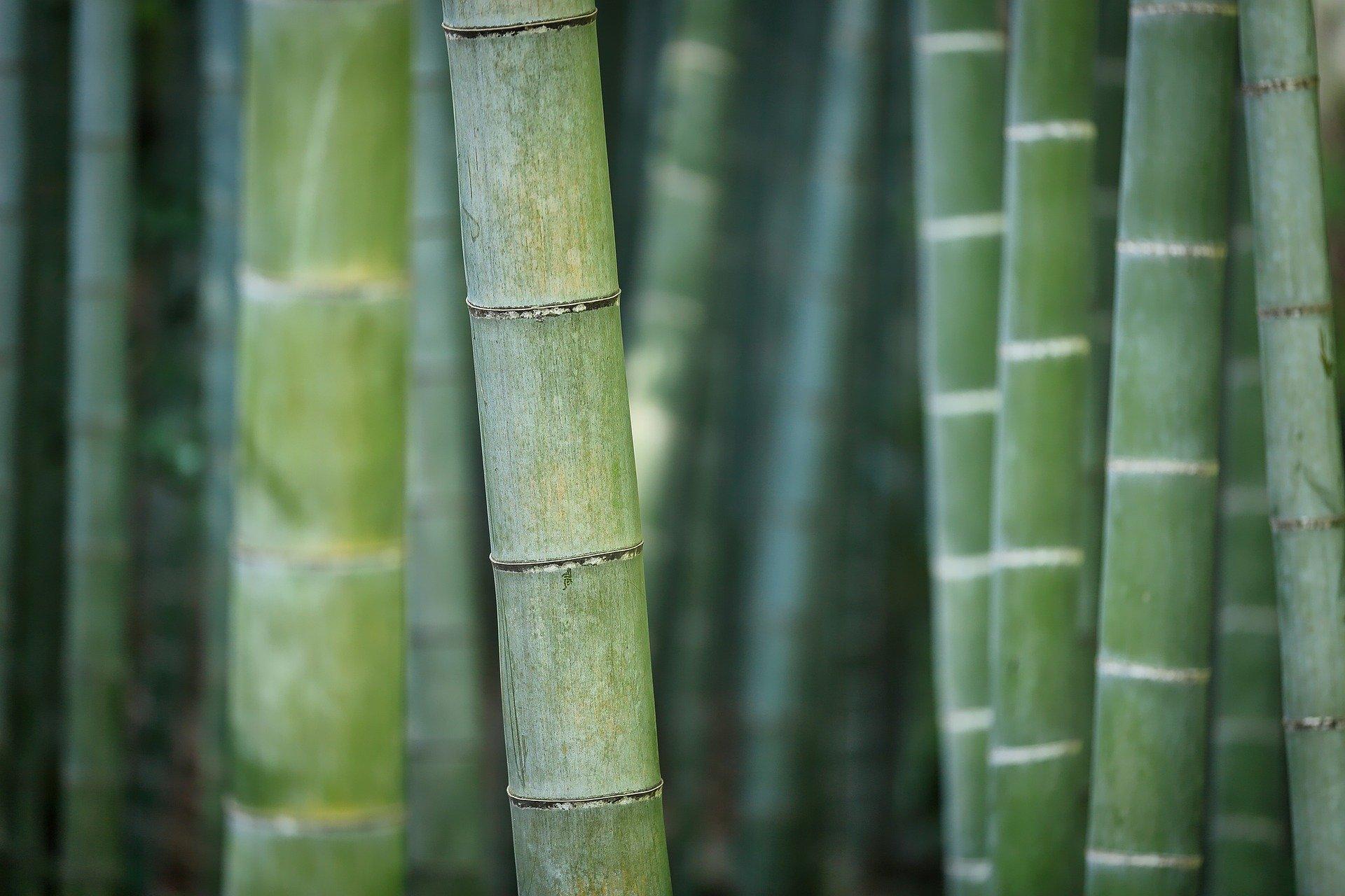 bamboo-3028709_1920