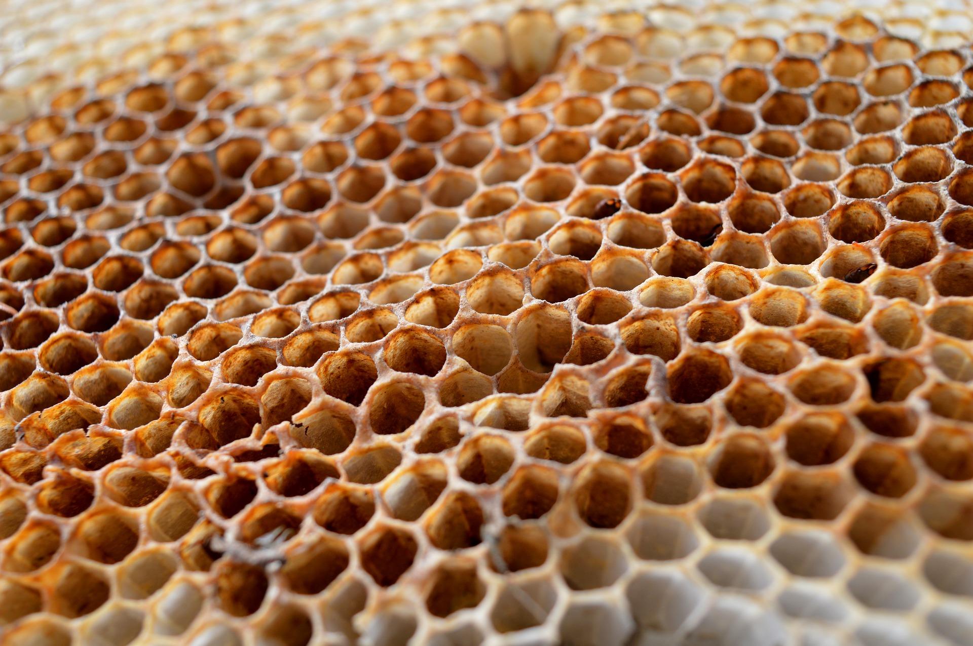 honeycomb-3705223_1920