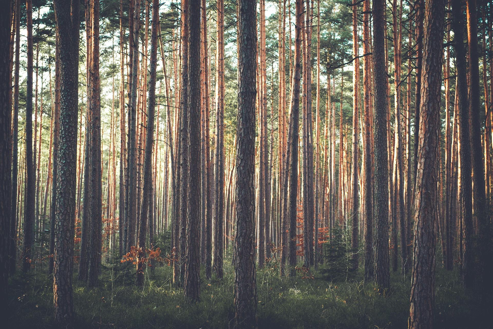 trees-1209088_1920