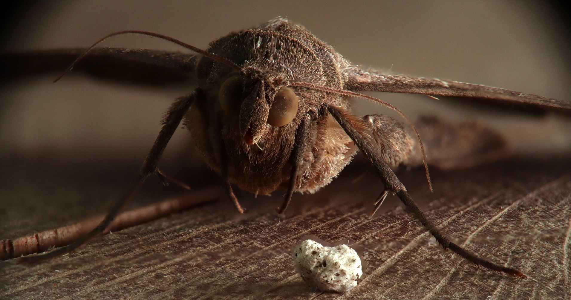 moth-4378908_1920