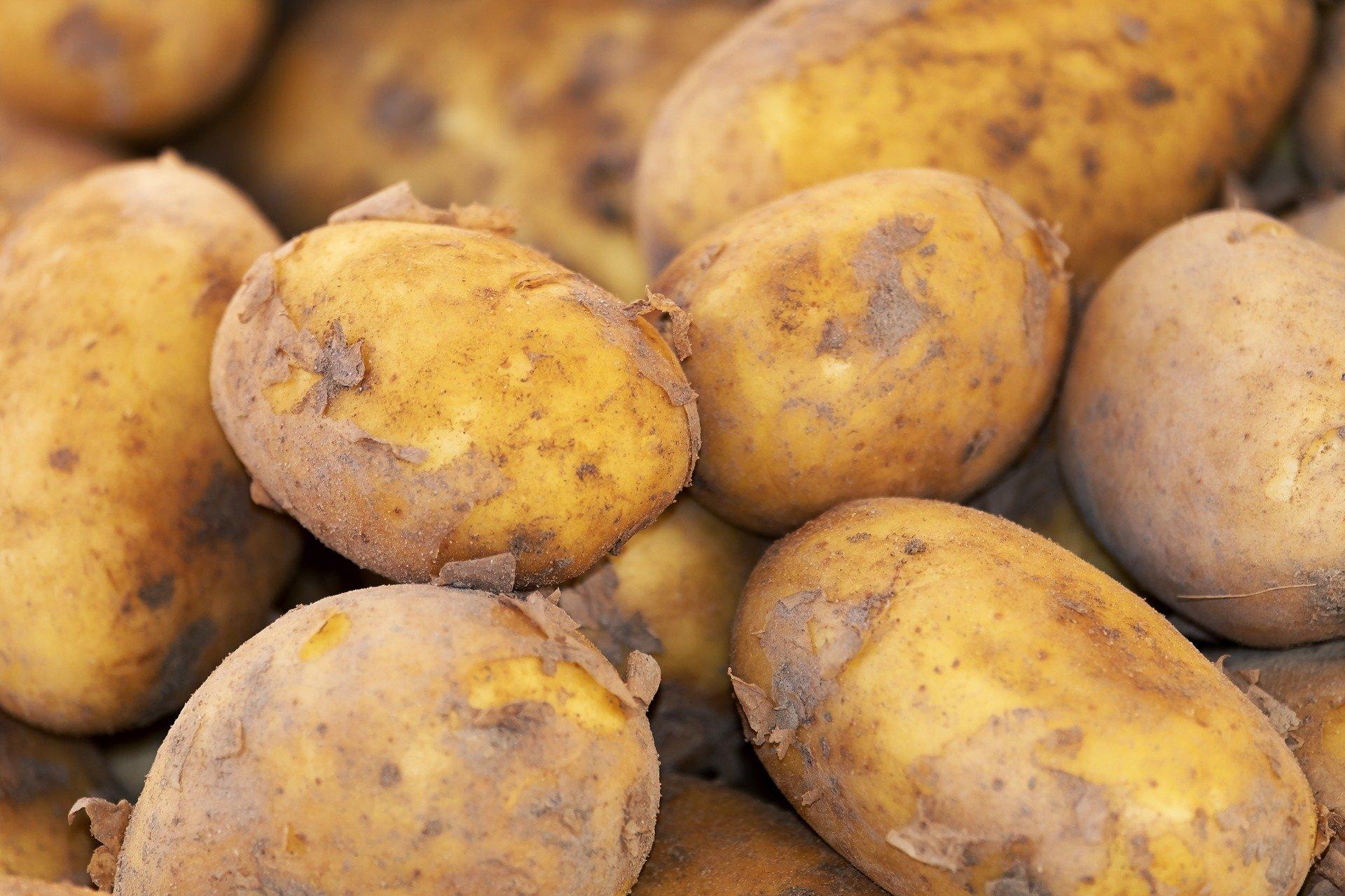potato-3440360_1920
