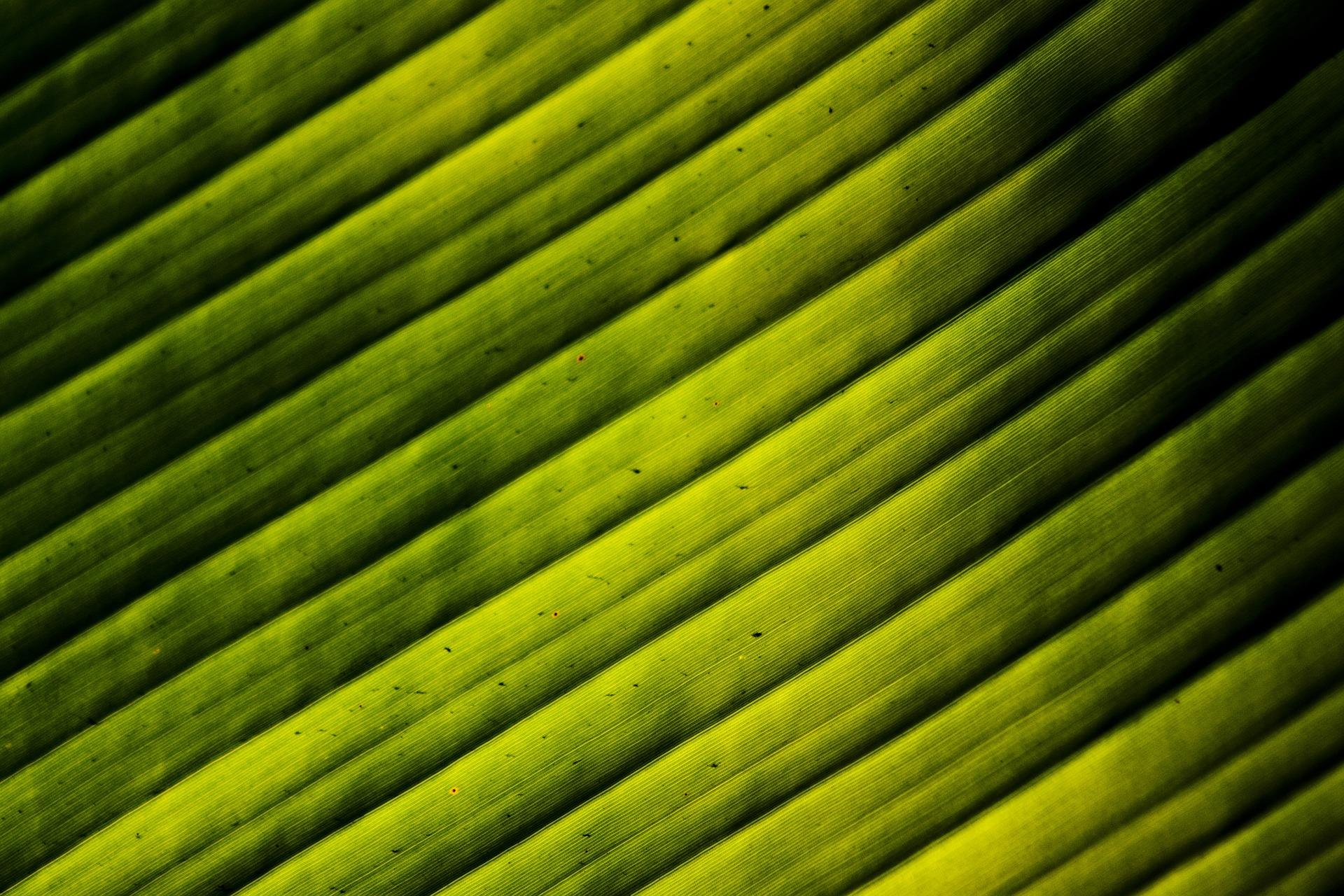 leaves-1862855_1920