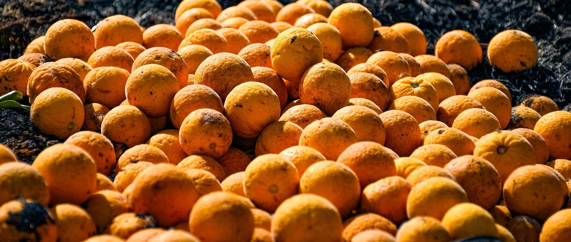 fruit-5030091_1920
