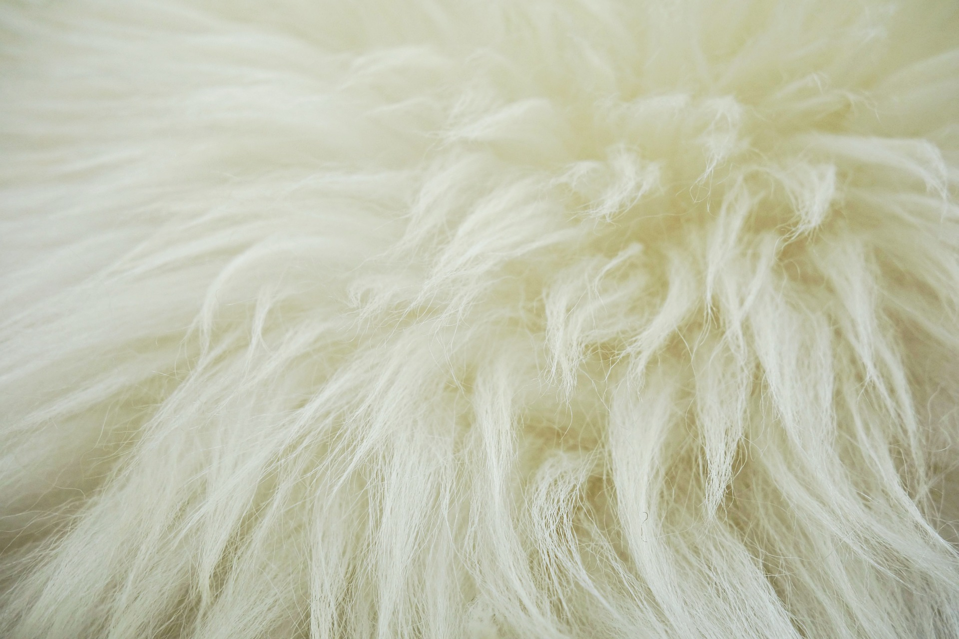 fleece-1524448_1920