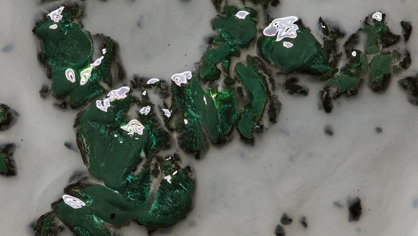 black-algae-t-shirt-1378-7-1376x777